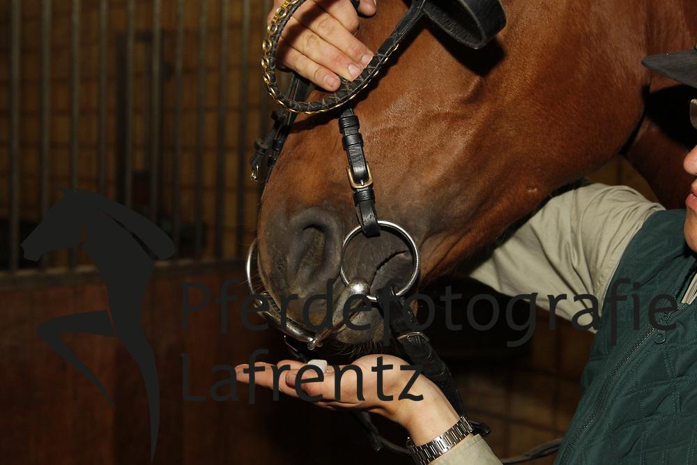 Auftrensen<br /> Redefin - Anreiten von jungen Pferden 2010<br /> www.sportfotos-lafrentz.de/Stefan Lafrentz