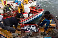 Fishermen unloading their catch in the port at Castries, St Lucia, The Windward Islands, The Caribbean