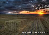 Montana Harvest
