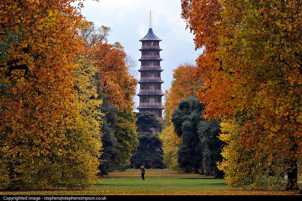 © Licensed to London News Pictures. 01/11/2011. Kew, UK. A woman photographs the trees in front of the Pagoda in the Japanese garden. People enjoy the Autumn sunshine in Kew Gardens today, 1st November 2011. Parts of the UK are experiencing higher than average temperature for the time of year.  Photo credit : Stephen Simpson/LNP