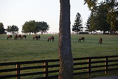 20110829_horseCountry