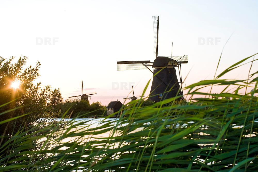 Nederland Kinderdijk gemeente nieuw Lekkerland 17-07-2009 20090717 Foto: David Rozing ..Serie 3 gemeenten Graafstroom, Liesveld en Nieuw-Lekkerland, groene hart.  Landschap Groene Hart, riet in avondzon, met op de achtergrond de wereldberoemde windmolens van Kinderdijk Deze staan sinds 1997 op de Werelderfgoedlijst van UNESCO. De 19 windmolens, die een molengang vormen, zijn een toeristische trekpleister.   Kinderdijk, unesco world heritage site, 19 windmills Landscape green heart.  windmolen      .Holland, The Netherlands, dutch, Pays Bas, Europe  Foto: David Rozing