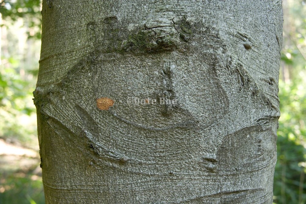 impression of an eye in a tree
