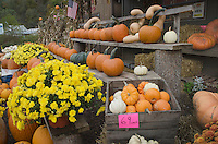 Pennsylvania Farmstand with an assortment of pumpkins gourds and flowers