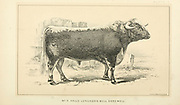 Longhorn Bull Cattle and dairy farming. Published 1887 by Govt. Print. Off. in Washington. United States. Bureau of Foreign Commerce (1854-1903)