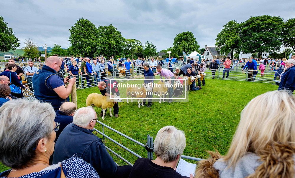 Biggar, South Lanarkshire, Scotland 23 July 2016<br /> <br /> Farmers showing Texel sheep in the show ring.<br /> <br /> (c) Andrew Wilson   Edinburgh Elite media
