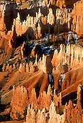 "Regimental ""hoodoos"" are eroded pinnacles of soft rock in Bryce Canyon National Park, Utah, USA. Published in Nature, the International Weekly Journal of Science, 17 January 2008 on the cover of the enclosed supplement ""Year of Planet Earth,"" pages 257-304."