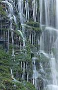 Water Falling on Moss
