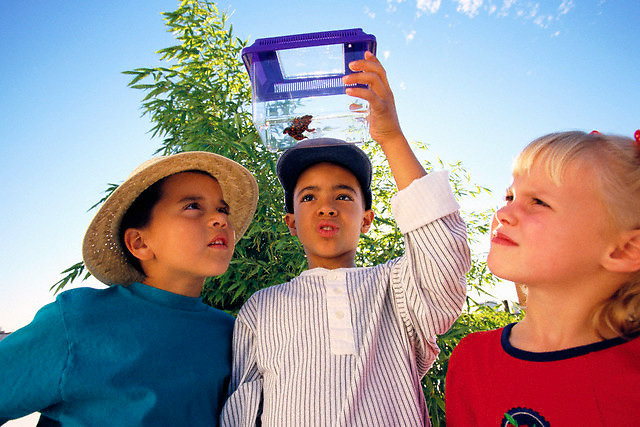 Children Looking at Frog in Container --- Image by © Jim Cummins/CORBIS