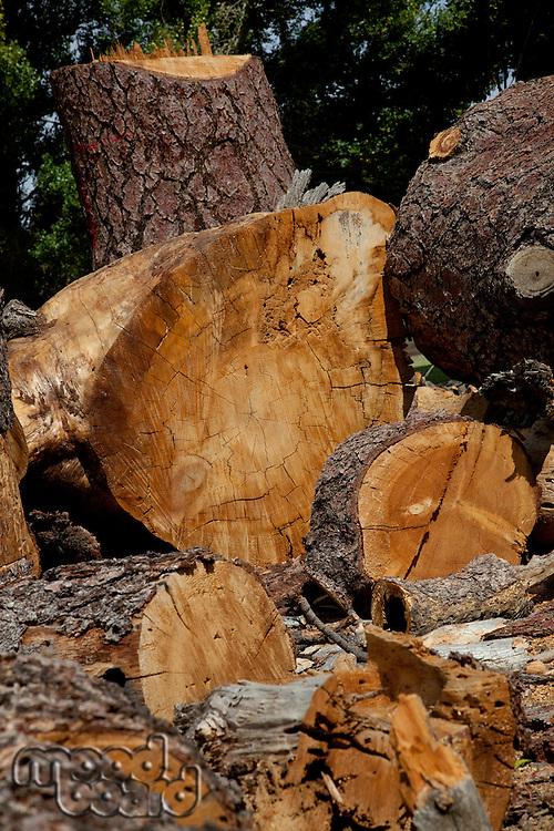Chopped wood logs