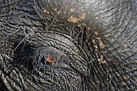 Elefant im Bandhavgarh National Park, Indien