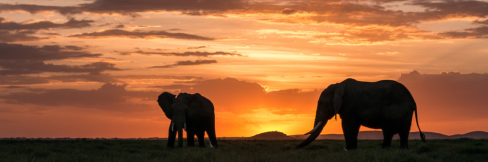 Elephants at sunset, Amboseli National Park<br />
