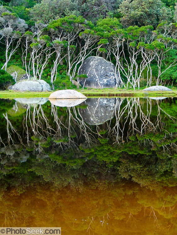 """Trees reflect in the tannin-stained water of Tidal River at Wilson's Promontory National Park in the Gippsland region of Victoria, Australia. Natural tannins leached from decomposing vegetation turn the water brown. Drive two hours from Melbourne to reach Wilson's Promontory, or """"the Prom,"""" which offers natural estuaries, cool fern gullies, magnificent and secluded beaches, striking rock formations, and abundant wildlife. Published on the back cover of """"Light Travel: Photography on the Go"""" book by Tom Dempsey 2009, 2010."""