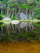 "Trees reflect in the tannin-stained water of Tidal River at Wilson's Promontory National Park in the Gippsland region of Victoria, Australia. Natural tannins leached from decomposing vegetation turn the water brown. Drive two hours from Melbourne to reach Wilson's Promontory, or ""the Prom,"" which offers natural estuaries, cool fern gullies, magnificent and secluded beaches, striking rock formations, and abundant wildlife. Published on the back cover of ""Light Travel: Photography on the Go"" book by Tom Dempsey 2009, 2010."