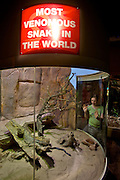 Darling Harbour. Sydney Wildlife World. Most venomous snake in the World: Inland Taipan or Fierce Snake.