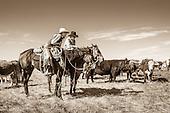 Farm & Ranch Photography