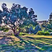 Malibu, CA,  Rustic Vineyard Residence