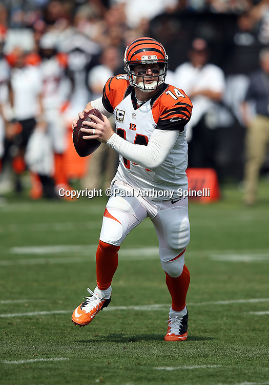 Cincinnati Bengals quarterback Andy Dalton (14) scrambles while looking to pass during the 2015 NFL week 1 regular season football game against the Oakland Raiders on Sunday, Sept. 13, 2015 in Oakland, Calif. The Bengals won the game 33-13. (©Paul Anthony Spinelli)