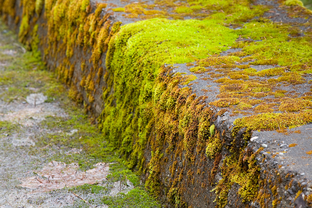 Mossy rocks on the Santiam Silk Creek in Oregon