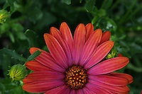 Red/orange flower