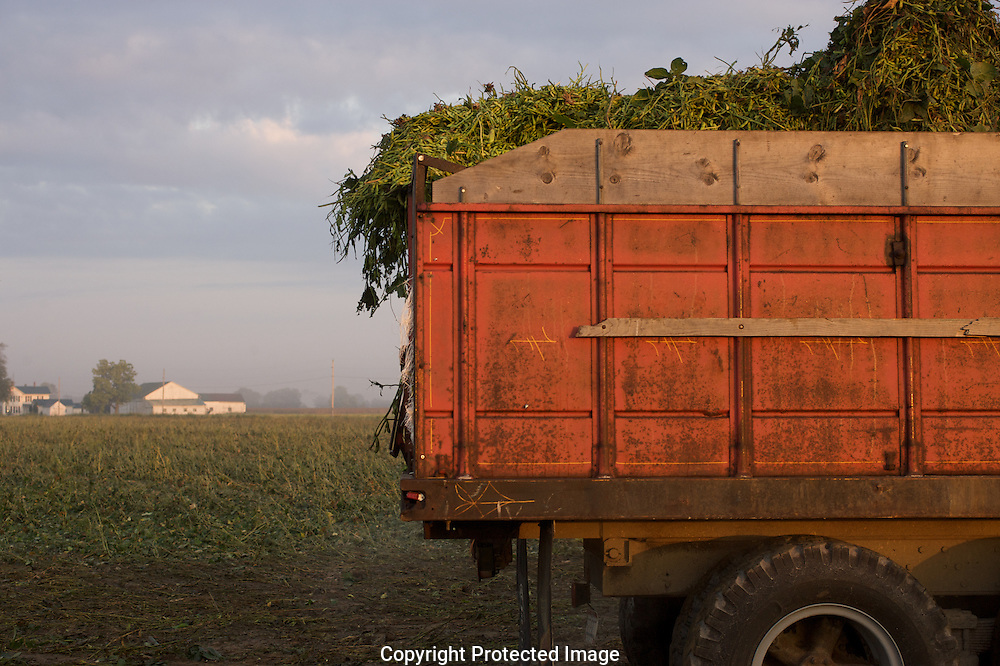 Edamame harvest at the Fry Farm in Tiffin, Ohio.Charles C Fry.American Sweet Bean Company