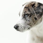pet photographer, dog photographer, LA headshot, LA studio photographer, LA dog photographer, puppy picture, cute puppy,senior dog,animal photo, dog picture,