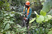 Ludwigshafen. 06.10.14 Parkinsel. Parkstra&szlig;e. Entlang der Parkstra&szlig;e wurden laut F&ouml;rderverein Parkinsel Hinweisschilder aufgestellt, wonach ab heute die Baumrodungen entlang der Parkstra&szlig;e und des Stadtparks beginnen. Um den Hochwasserschutz zu verbessern, wird der Deich um eine Spundwand verst&auml;rkt. Dazu sollen &uuml;ber 120 B&auml;ume gerodet werden.<br /> <br /> Bild: Markus Pro&szlig;witz 06OCT14 / masterpress