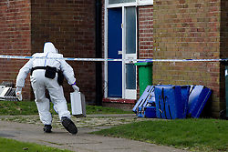 © licensed to London News Pictures. Rochdale, UK  04/02/2012. Forensic examiners investigate the scene where the body of a man was found yesterday afternoon on Lower Bamford Close. Two men have been arrested on suspicion of murder. Please see special instructions for usage rates. Photo credit should read Joel Goodman/LNP