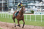 Kruzhlinin and jockey Barry O'Neill go to the start for the 4.05PM The Randox Health Foxhunters' Steeple Chase (Class 2) 2m 5f during the Grand National Festival Week at Aintree, Liverpool, United Kingdom on 4 April 2019.