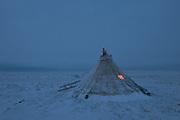 A chum rests on the Yamal Peninsula. 3:18pm, November 19, 2017.