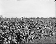 29/10/1959<br />