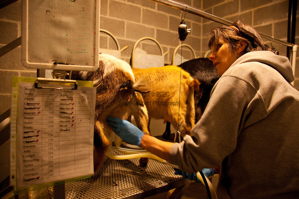 Gianaclis Caldwell doing the morning milking.