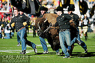 November 23, 2012: Ralphie the Buffalo is run out onto the field prior to the start of the NCAA Football game between the Utah Utes and the Colorado Buffaloes at Folsom Field in Boulder Colorado