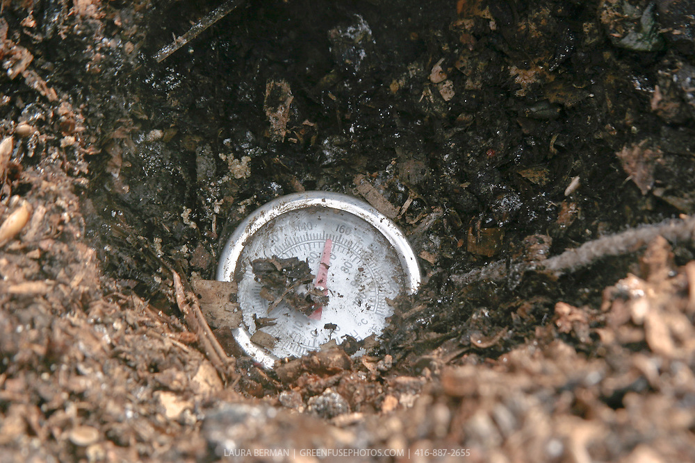 A thermometer in a compost pile showing 55 degrees C.