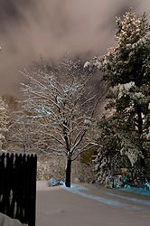 Fresh Fallen Snow on Pines in the Still of the Night. Hamden CT January 7, 2011