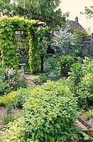 garden with paths and a wooden arbour with golden hop growing