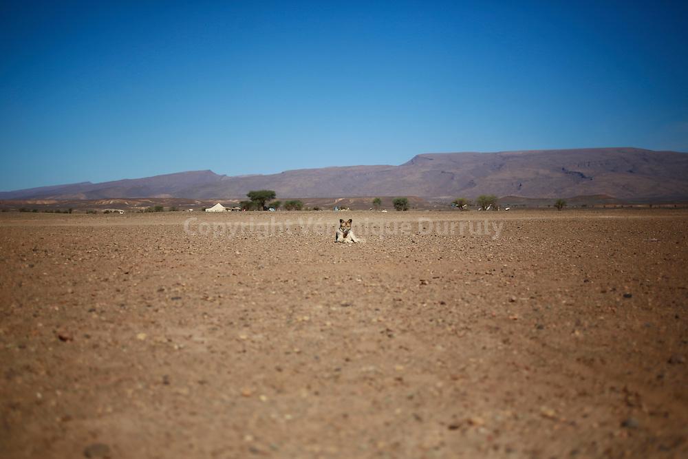 nomades du desert marocain, région du lac asseché d'Iriqui, Maroc // nomads of the desert , Morocco