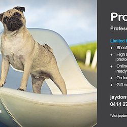 Professional Pet Photography in Sydney,and suburbs. Dogs, cats, horses, birds and more