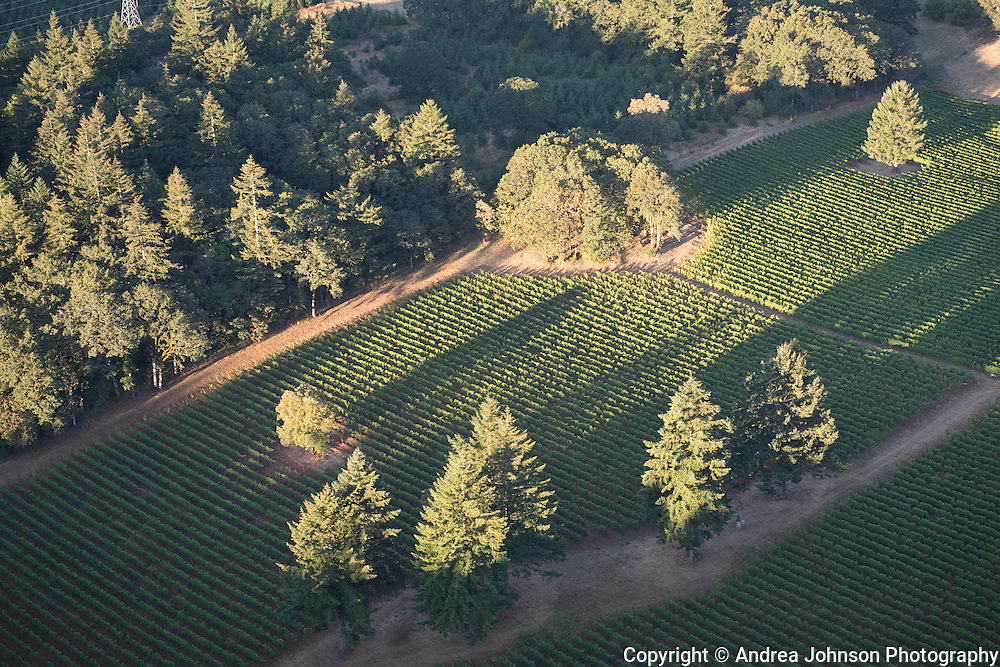 Lee's vineyard, Chehalem Mountain AVA, Willamette Valley, Newberg