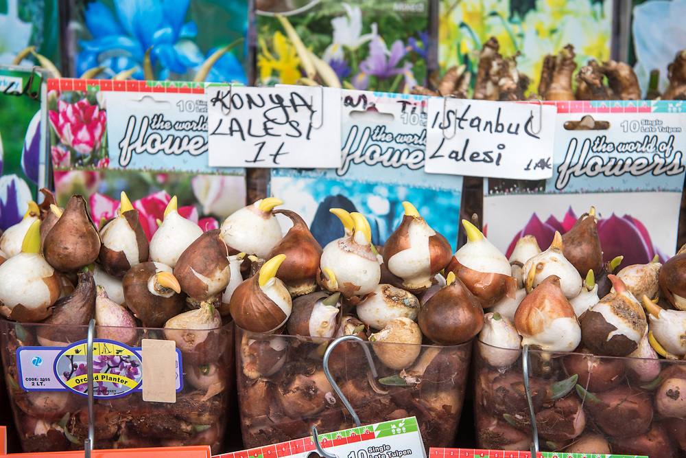 Plastic containers hold a bounty of bulbs for purchase at outdoor marketplace, Istanbul, Turkey.