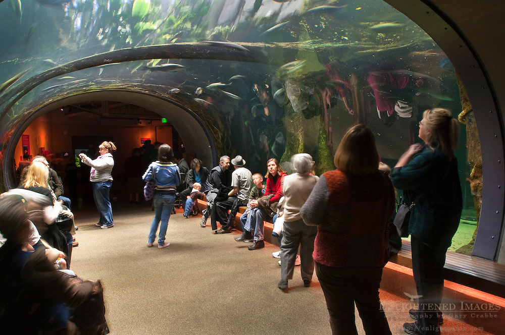 Visitors in the Amazon Flooded Forest exhibit, California Academy of Sciences, Golden Gate Park, San Francisco, California