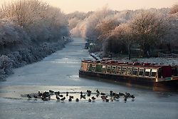 © under licence to London News Pictures 7/11/2010 Ducks find a small break in the ice on the canal at Sutton Cheney in Leicestershire. .Picture credit: Dave Warren/London News Pictures...