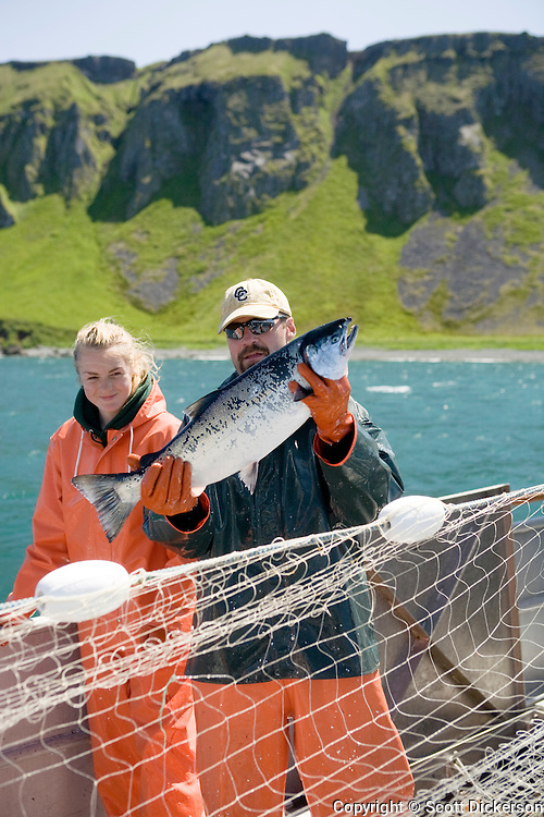 Buck Laukits holds up a large silver salmon caught while commercial fishing aboard the gillnetter F/V Lucky Dove in the area M region, Eastern Aleutian Islands, Alaska