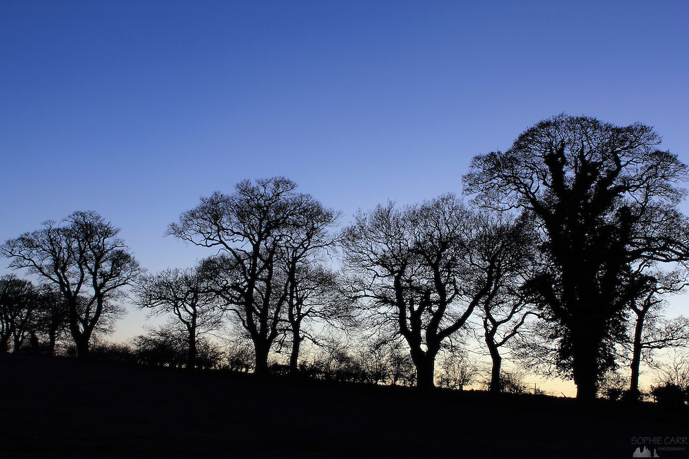 Winter trees in eastern Suffolk