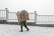 A labourer covered with a blue plastic sheet, walking through the a snowstorm in Shimla. The capital of the state of Himachal Pradesh, India