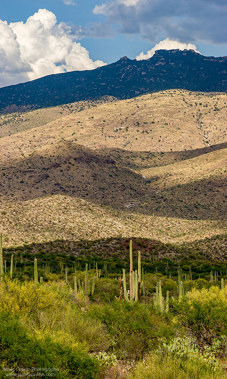 The Rincon Mountains in Saguaro National Park, Arizona