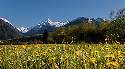 THEMENBILD - Blick über eine Blumenwiese auf den Kitzsteinhorn Gletscher mit Schnee bedeckt, aufgenommen am 10. Mai 2017, Kaprun, Österreich // View over a flower meadow on the Kitzsteinhorn glacier covered with snow at Kaprun, Austria on 2017/05/10. EXPA Pictures © 2017, PhotoCredit: EXPA/ JFK
