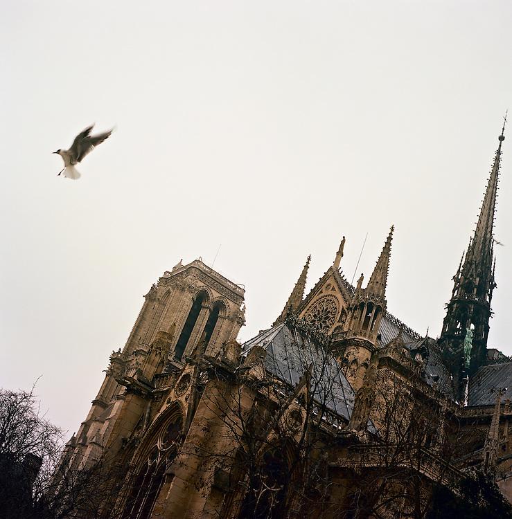 Bird in flight in front of Notre Dame, Paris