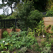 Parts of the Energy Garden at Brondesbury Park Station with courgettes, herbs and fruits. The water is collected rain water and the pump is solar panel powered. Energy Gardens is a pan-London community garden project where reclaimed land alongside over ground train stations and track are cultivated by local community groups. Up 50 gardens are projected with the rail network being the connection grid. The project is a collaboration between Repowering London, local community groups and station managers working for TFL.