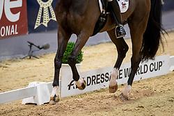Werndl Benjamin, GER, Daily Mirror 9<br /> Grand Prix de Dressage CDI-W<br /> FEI Dressage World Cup<br /> Neumünster - VR Classics 2019<br /> © Hippo Foto - Stefan Lafrentz